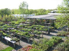 """garden center california - """"Google"""" paieška"""