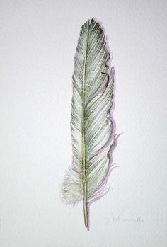 dove feather