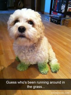Funny pictures about The After Effects Of Grass Cutting. Oh, and cool pics about The After Effects Of Grass Cutting. Also, The After Effects Of Grass Cutting photos. Funny Animal Pictures, Dog Pictures, Cute Pictures, Animal Pics, Daily Pictures, Funny Images, Cute Puppies, Cute Dogs, Dogs And Puppies