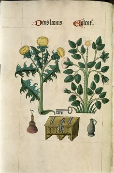Tudor Herbal,1520   Retronaut