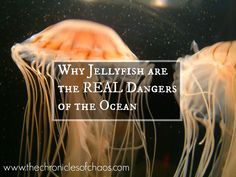 The Chronicles of Chaos: Why Jellyfish are the Real Dangers of the Ocean
