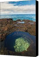 Tide Pool - Hulopoe Bay