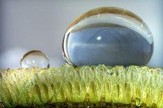 """Die Ausstellung """"Kleine Strukturen – große Wirkung"""" zeigt Mikroskopische Aufnahmen verschiedener Oberflächen aus der Tier- und Pflanzenwelt. Ab dem 6. April im Botanischen Garten der FAU. (Bild: Peter Höbel)"""