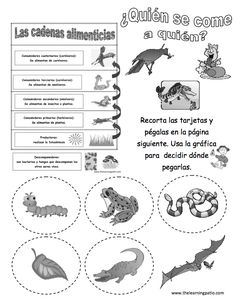 Ciencias:¿Quién come a quién? Biology Lessons, Teaching Biology, Science Lessons, Science For Kids, Science Activities, Science And Nature, Bilingual Classroom, 2nd Grade Classroom, Science Classroom