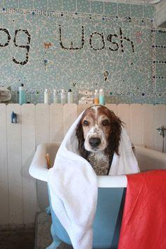 Dog Grooming Kimball Mn