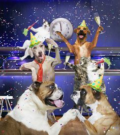 happy new year everyone these dogs are sure having fun new years