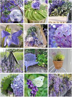 flickr favs :: lavender & green | Flickr - Photo Sharing!