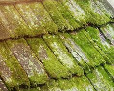 moss growing on roof tiles