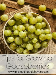 Tips for Growing Gooseberries, including how to plant gooseberries, how to grow gooseberries in containers, and how to care for and harvest gooseberries.:
