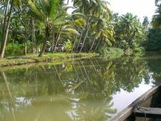 Homestay and Canoe tours from Munroe Island through the Ashtamudi Lake Backwaters. Duck Farming, Kerala Backwaters, Kerala Tourism, Best Model, Forests, Canoe, Woods, Destinations, Boat