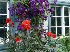 http://www.gardenshowblog.com/wp-content/uploads/2011/07/BF-Day-1-Clematis-dahlia-PS.jpg