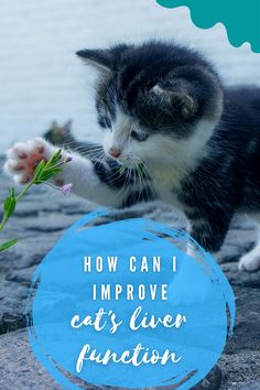 Feline Hepatic Support is formulated to support:Liver metabolismHepatic circulation, bile production and flowHepatic immune function #cat #improve #liver #function Cat Care Tips, Cat 2, Cool Cats, I Can, Cat Lovers, Animals, Animales, Animaux, Animais