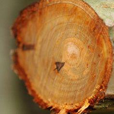 【loucrearts】さんのInstagramをピンしています。 《🌳 • • • #tree #chopped #autumn #forest #森 #秋 #fall #brown #rain #november #nature #naturelovers #justgoshoot #instanature #naturegram #macro #photography #nikon #intothewoods #nikonphoto #🍂 #🌳》