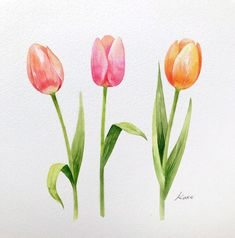 Korean Artist Reveals How To Draw Perfect Flowers In 3 Simple Steps Tulip Drawing, Flower Art Drawing, Watercolor Drawing, Watercolor Illustration, Tulip Watercolor, Flower Paintings, Easy Flower Drawings, Flower Drawing Tutorials, Easy Drawings