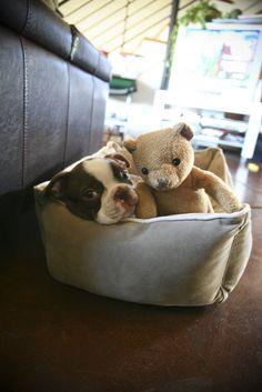 So cute......but that will be a fluffnado tomorrow!  :)