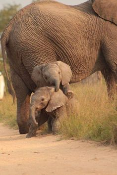 Wundervolle Tiere www.de - InneresGold - Wundervolle Tiere www.de Wundervolle Tiere www. Cute Baby Animals, Animals And Pets, Funny Animals, Animals In The Wild, Large Animals, Beautiful Creatures, Animals Beautiful, Majestic Animals, Baby Elefant