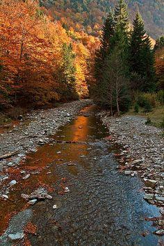 Autumn at Cheile Tisitei | Cheile Tisitei, National Park, Vrancea, Romania