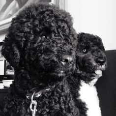 Bo and Sunny in Classy Black and White | Michelle Obama Pictures - Photos of the First Lady