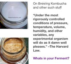 Is my Kombucha Good, is it safe? Making Kombucha, Kombucha Scoby, Kombucha How To Make, Family Recipes, Family Meals, Kombucha Mushroom, Mushroom Tea, Fermented Tea, Brewing