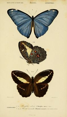 n180_w1150 by BioDivLibrary, via Flickr