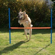 http://www.zooplus.pl/shop/psy/zabawki_szkolenie_psa/agility_sport_psa/fun_sport/119599