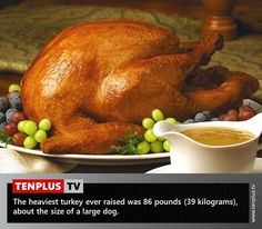 Fact of the day: the heaviest turkey ever
