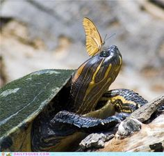 cute animals - Butterfly and Turtle