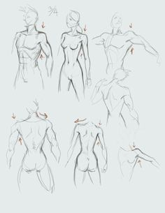 how to draw, painting, comics,anime, manga, monkey, woman,king, human, man, woman, male, female, body, torso, tutorial, girl.