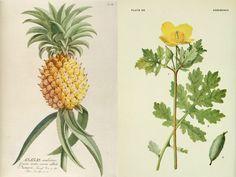 Botanical prints #2 : Fresh & Wood