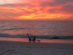 Sunset on North Captiva Island where I spent this past week. (7/20-27/2013) ahhhhh
