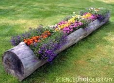 use an old log to grow flowers...How cute right?