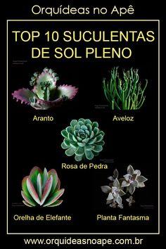 Succulent Display, Succulent Pots, Planting Succulents, Planting Flowers, Succulent Landscaping, Low Maintenance Plants, Love Garden, Cactus Y Suculentas, Plantation