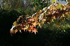 Greyton leaves