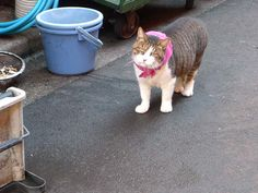 Thursday: Alley Cat with Scarf, Shimbashi by hidelafoglia, via Flickr