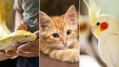10 Diseases Your Pets Could Give You | Everyday Health