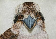 A gallery of all the Birdland Series pastel drawings by artist Rachel Newling, portraits of Australian birds. Pastel Drawing, Painting & Drawing, Painting Styles, Bird Artists, Bird Artwork, Bird Paintings, Australian Animals, Australian Artists, Bird Embroidery