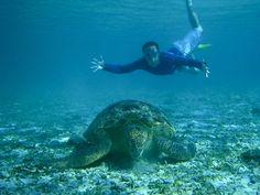 Fracking Huge Turtle! | Flickr - Photo Sharing!