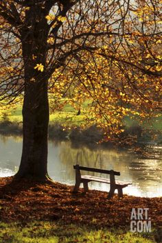 Belgium Bench in Park in Autumn by Beech Tree and Lake Photographic Print at Art.com