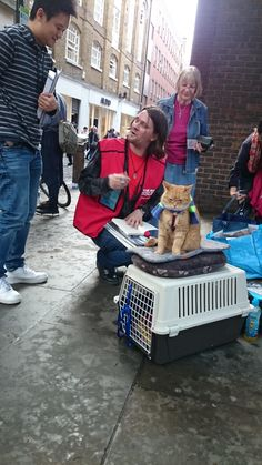 Bob the street cat in Convent Garden today