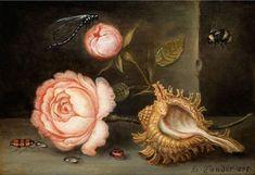 Балтазар ван дер Аст. Натюрморт с розой, раковиной и насекомыми