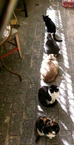 sun bathing Cats..