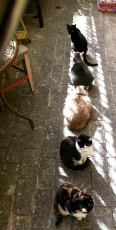sun bathing Cats..