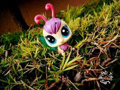 Flutterby in the garden (FTLPS)
