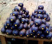 ... : Cas de Dacryodesedulis (safou) dans le Bas-Congo et à Kinshasa