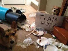 ¡Trabajo en equipo!
