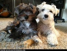 Animals I Love : Photo