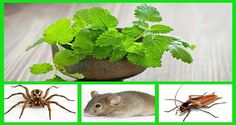 Nobody wants insects, those small creatures which feed on carrion, meat, and plants. If you want to get rid of them in your house you can use chemical repellents, but they are harmful for...