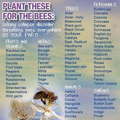 Plant these for the bees! All bees not just honey bees!
