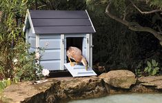1000 images about ducks houses on pinterest duck house for Duck and goose houses