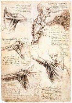 Human Figure Drawing Leonardo da Vinci — Anatomical studies of the shoulder, Leonardo Da. Wolves Of Wall Street, Figure Drawing Books, A Level Art Sketchbook, Sketchbook Ideas, Sketching Techniques, Anatomy Sketches, Human Drawing, Drawing Exercises, Anatomy Study